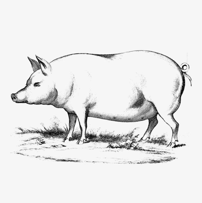 手绘猪简笔画