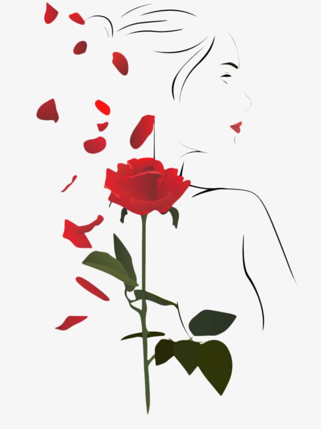 手绘玫瑰花瓣唯美插画