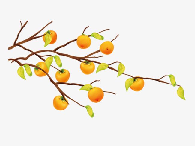 手绘柿子树