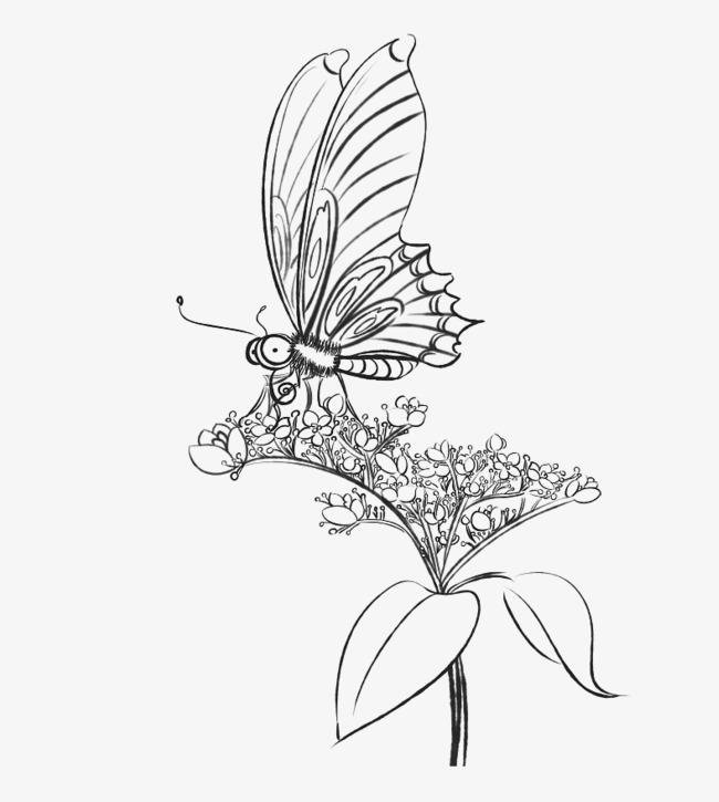 蝴蝶花朵铅笔画