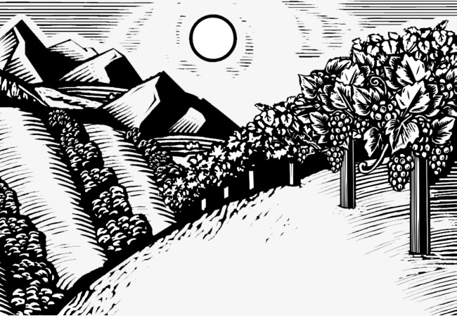 黑白木版画插画山脉与树_png素材免费下载_ 982*677