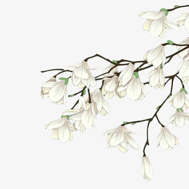 白色手绘木兰花