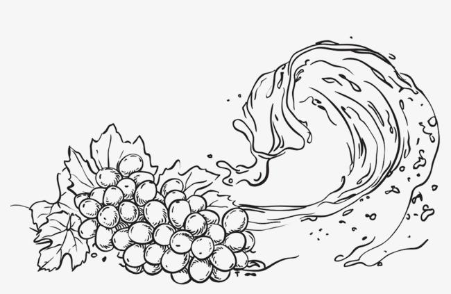 手绘阴影葡萄线稿