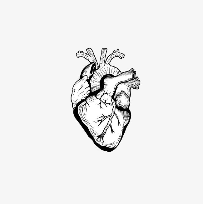 精致黑色手绘心脏血管矢量图