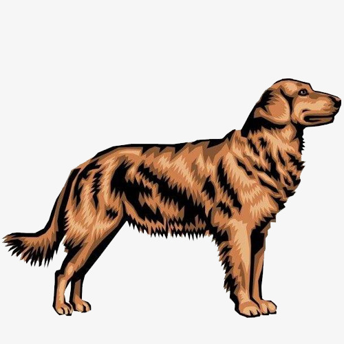 手绘卡通金毛犬