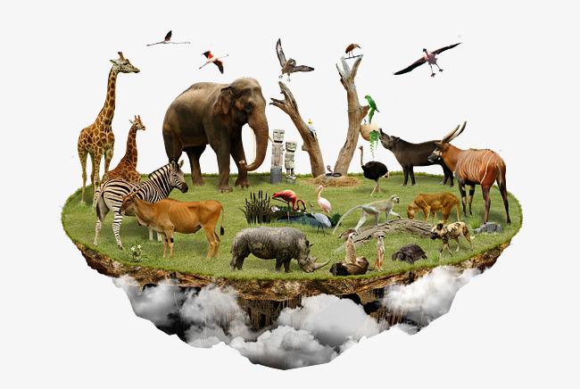 悬浮岛上的动物聚会素材图片免费下载_高清p