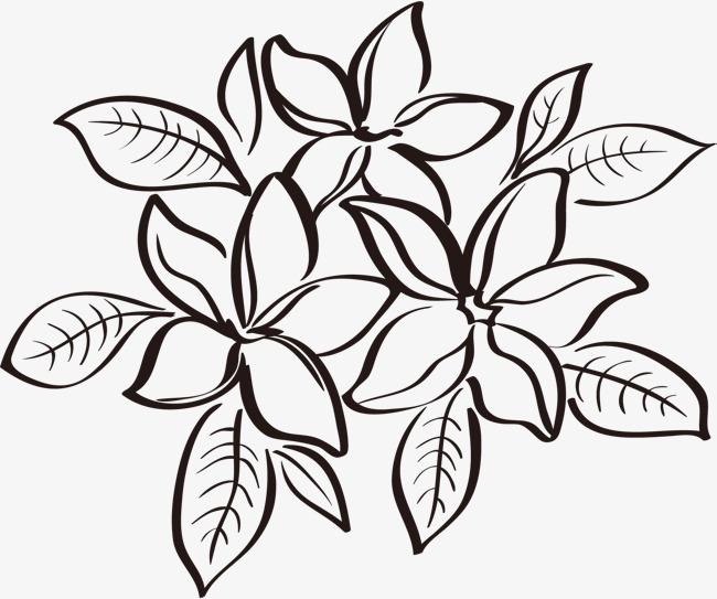线条优美的植物叶子线描图