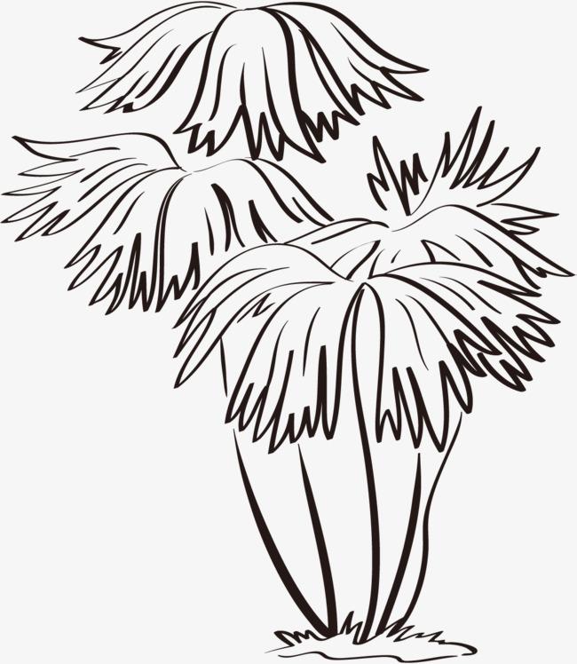 线描树木叶子透明png