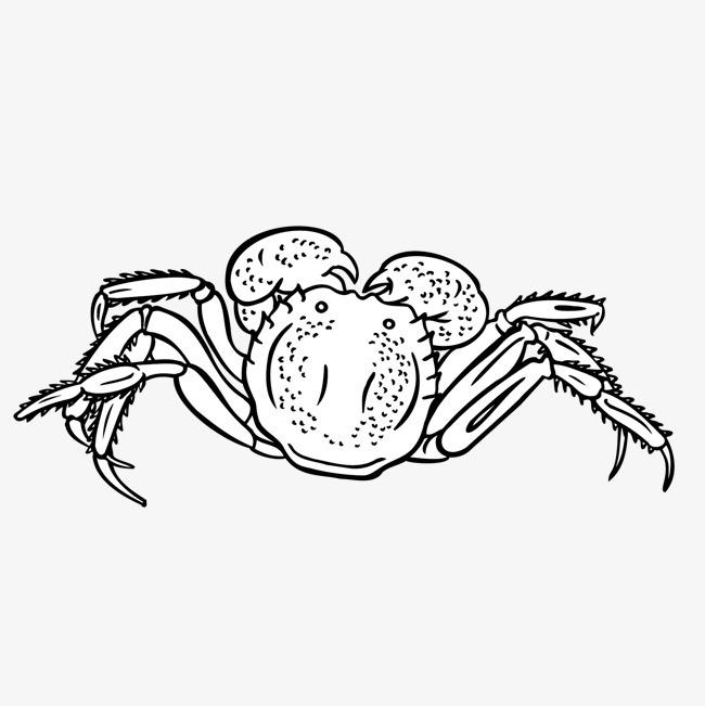手绘 螃蟹