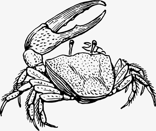 手绘抬脚的螃蟹装饰画