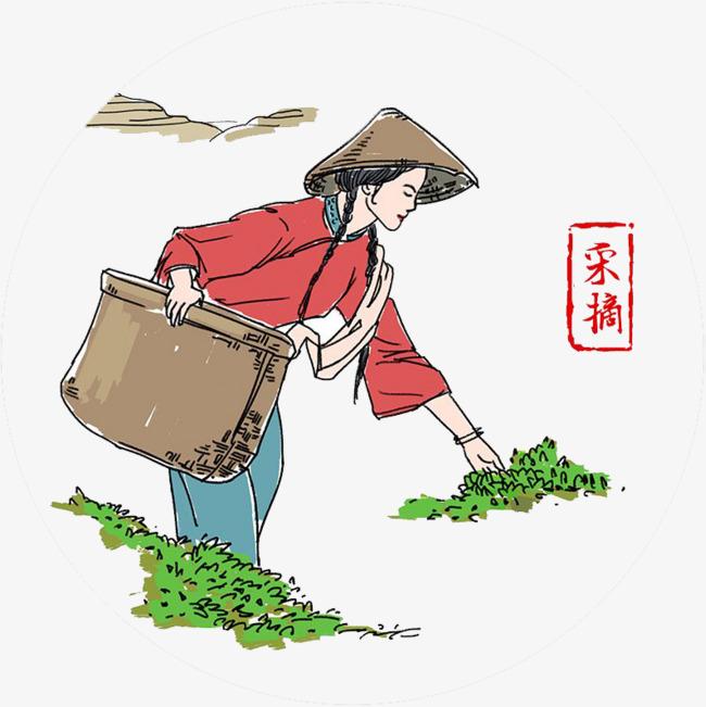 采茶女采摘茶叶手绘彩绘图案