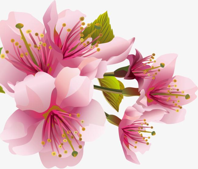 粉色手绘的鲜花装饰