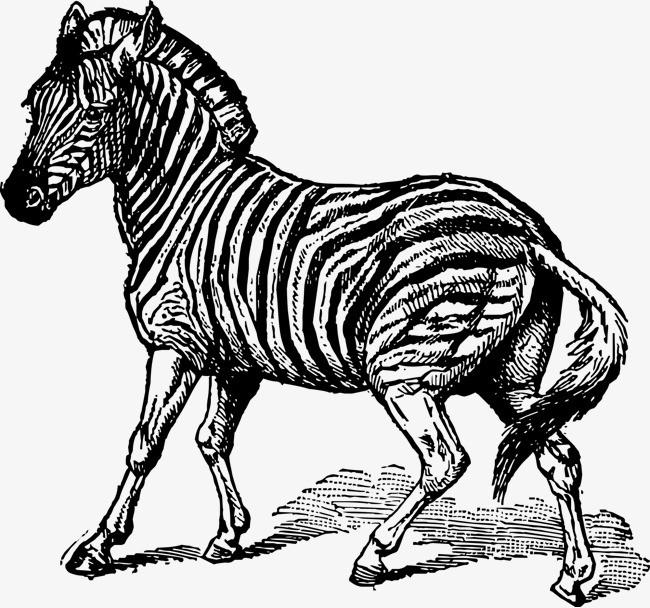奔跑的斑马手绘图
