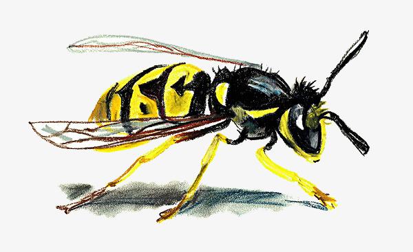 手绘写实画风蚂蜂