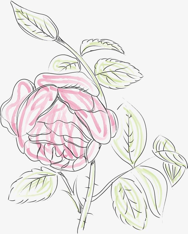 玫瑰花手绘图