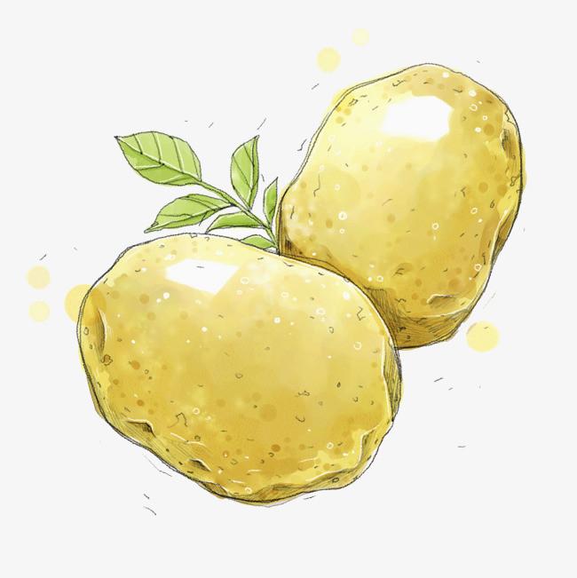 手绘简笔土豆
