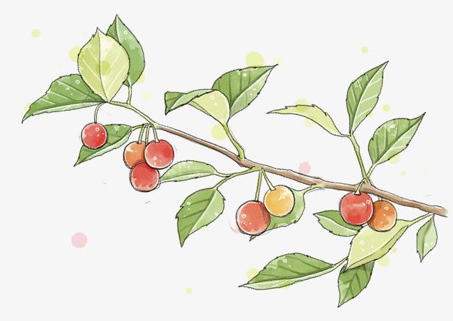 手绘樱桃图