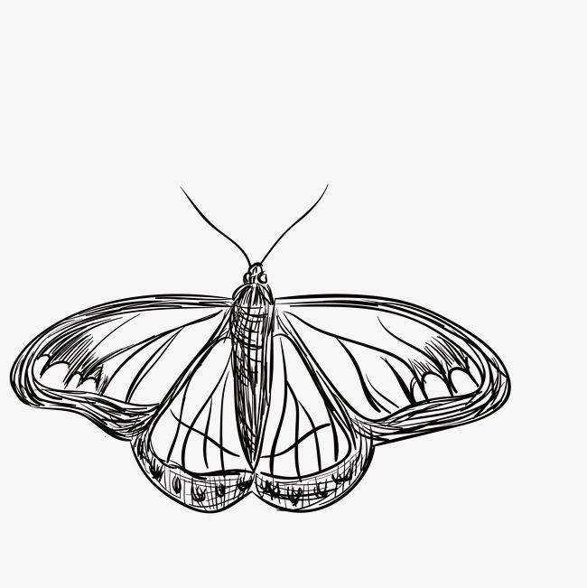 黑色手绘线条飞蛾
