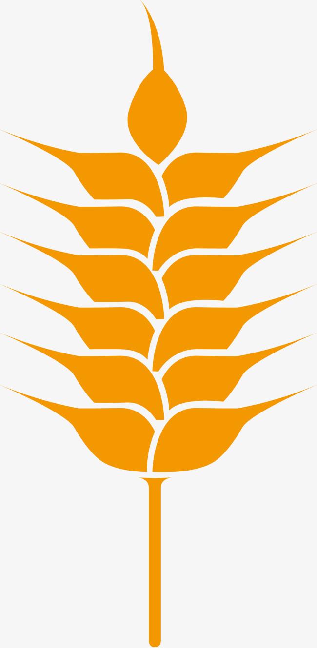 农作物小麦手绘图