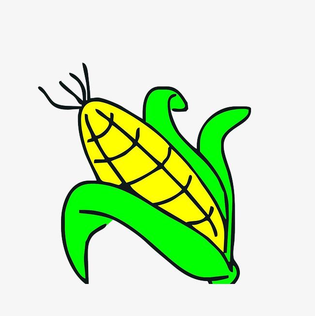 简笔手绘玉米