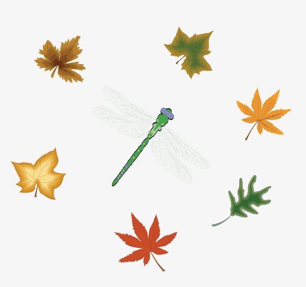 手绘彩色叶子和蜻蜓