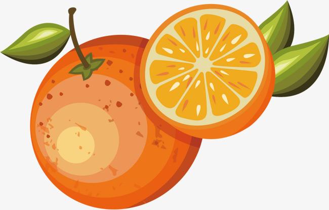 矢量手绘橙子