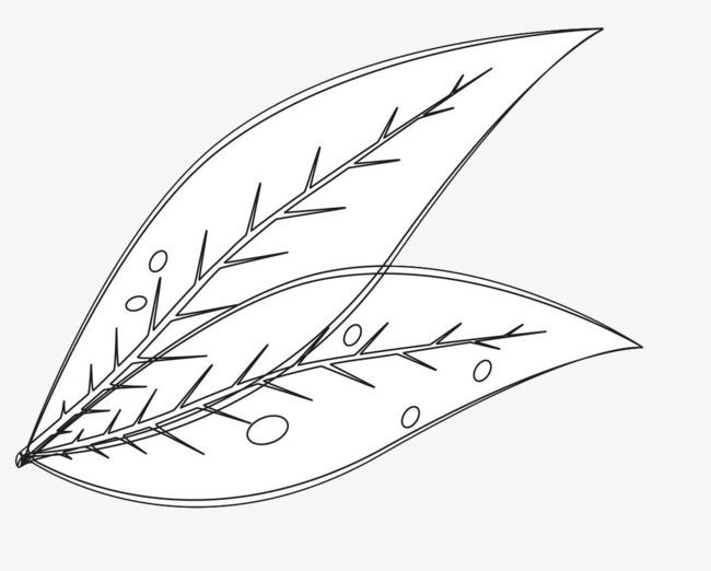 线条手绘叶子露珠