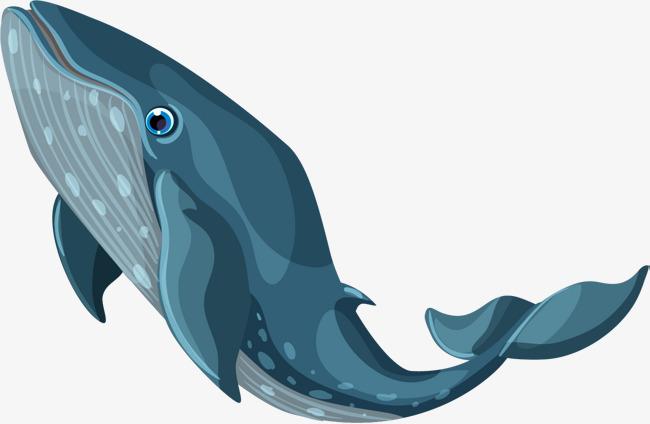 卡通手绘北极鲸鱼png免费下载
