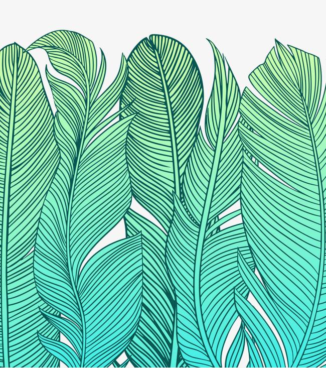 绿色的手绘芭蕉扇叶子
