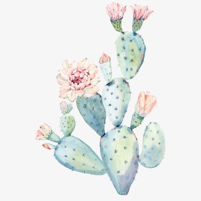 手绘水彩仙人掌植物