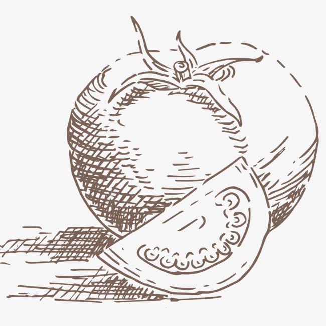 手绘速写西红柿矢量图