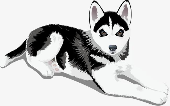 黑白可爱卡通图片_黑白可爱动物头像