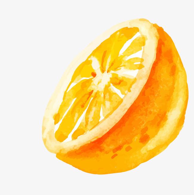 卡通手绘橙子矢量图