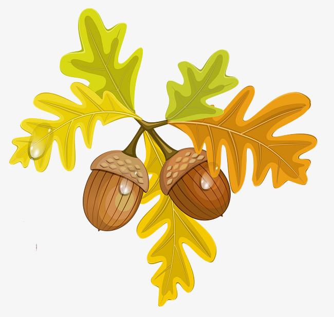 卡通树叶和松果装饰png素材下载_高清图片png格式(:)图片