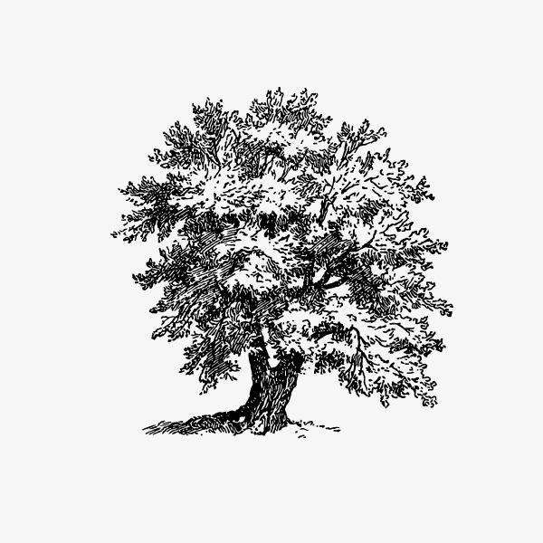 卡通简约手绘树木广告设计