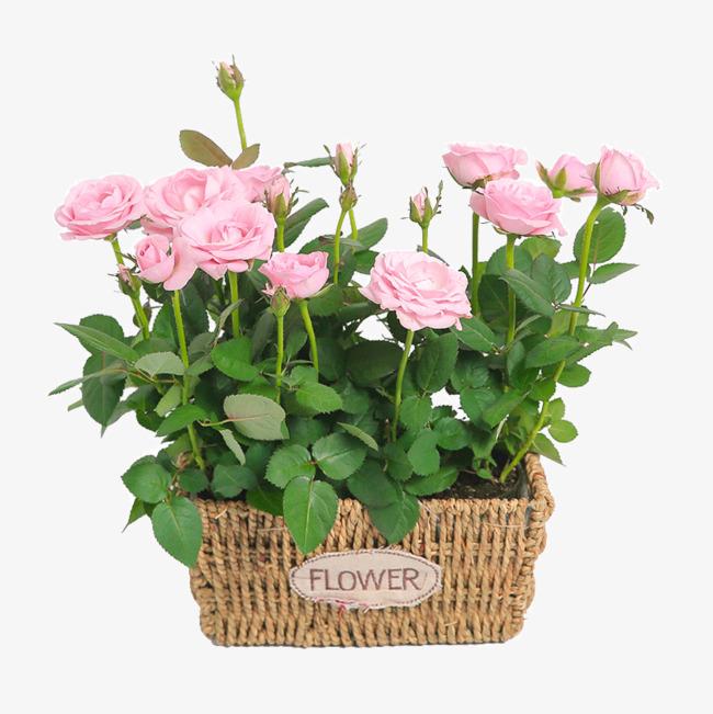 卡通手绘美丽的花朵盆栽png素材下载_高清图片png格式