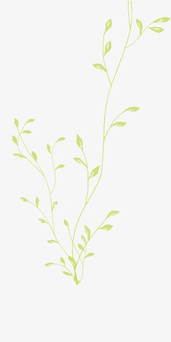 卡通手绘绿色的叶子