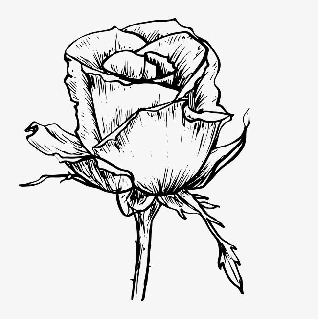 黑白卡通花草手绘素描玫瑰花
