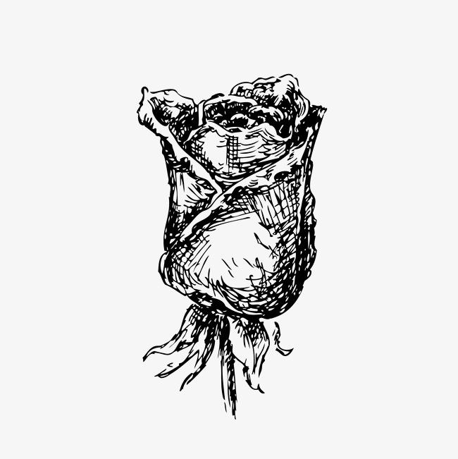 含苞待放玫瑰花黑白手绘