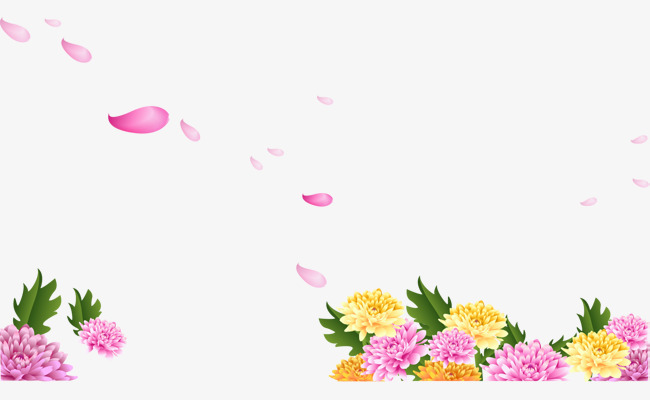 清新菊花和花瓣免抠素材