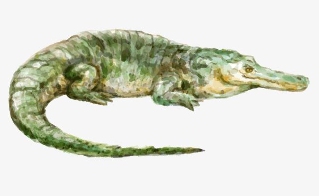 油画绿色鳄鱼手绘彩色鳄鱼免抠下载