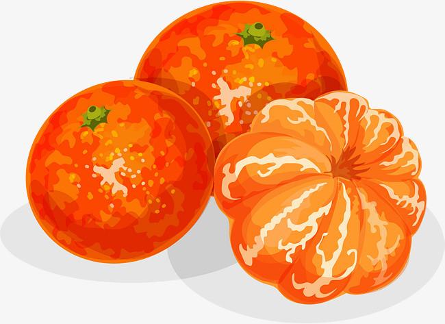 手绘橙子水果食物