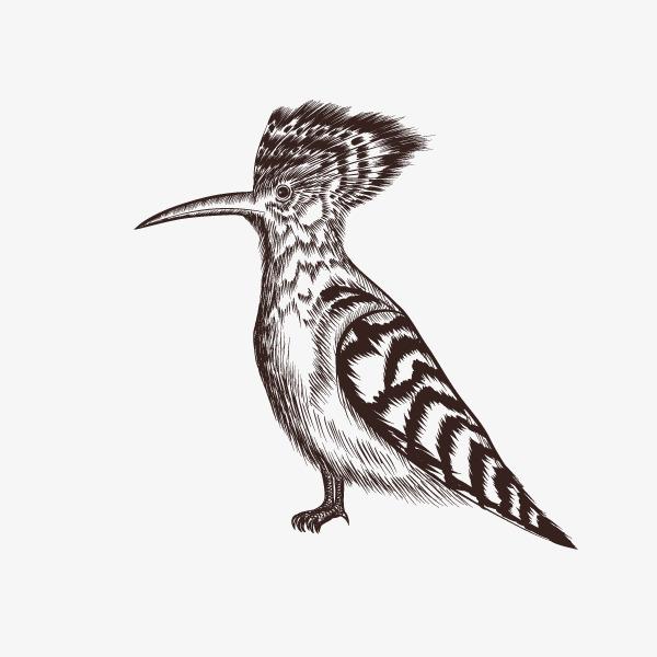 卡通素描森林动物小鸟png素材下载_高清图片png格式