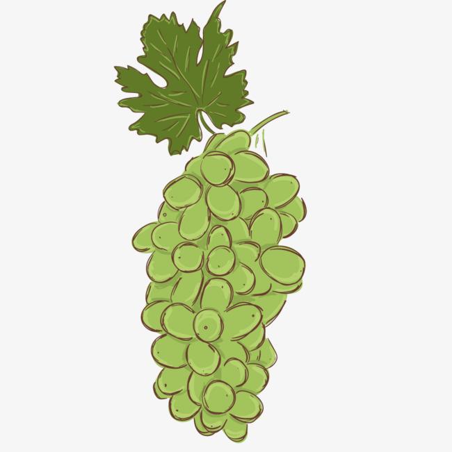 手绘卡通绿色葡萄