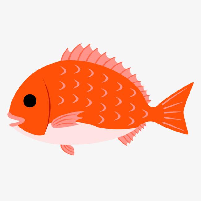 橘色海鱼手绘简图图片