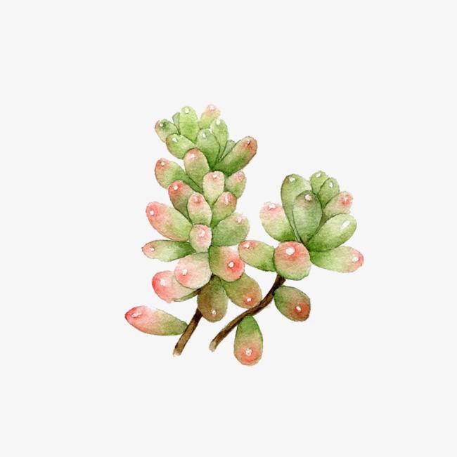 彩色手绘植物装饰