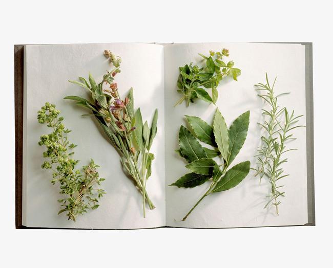 桂花花蕊叶子标本