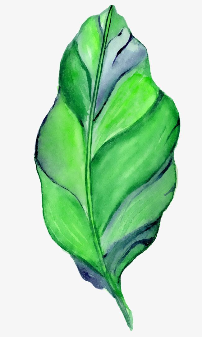 绿色手绘叶子春天png素材下载_高清图片png格式(编号