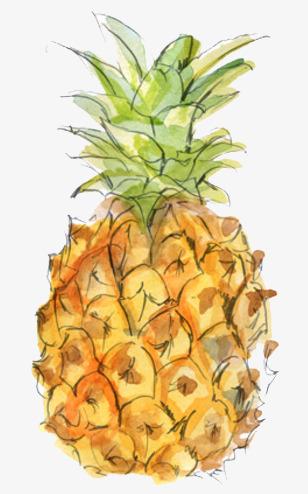 卡通手绘水彩菠萝