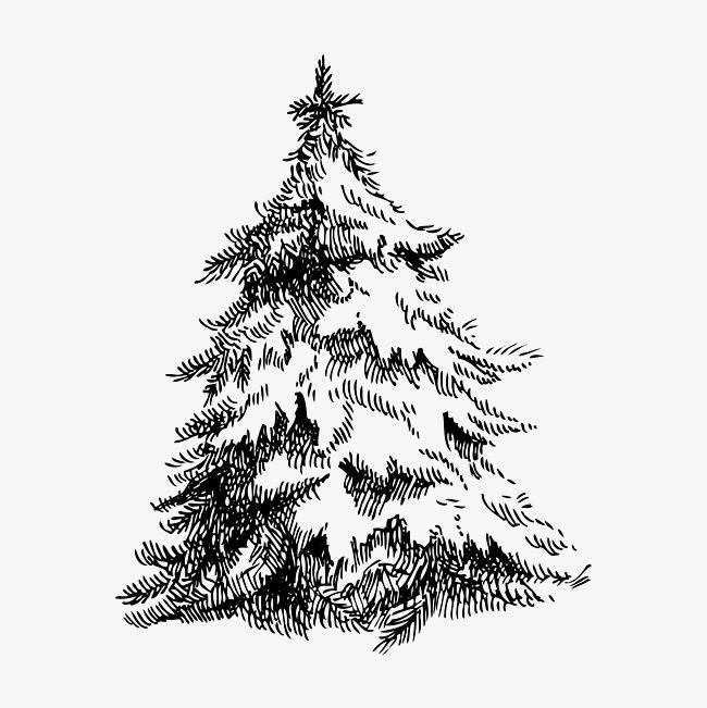 松树简笔画手绘